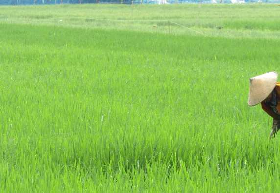 Pemanfaatan Dana Desa - Rabat Beton (Ngecor Dalan Gang) Kedungwungu RT 04 Desa Kedunggading 2020